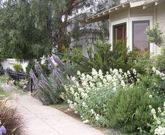 California & Mediterrean plants billowing from a tiny garden
