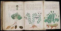 Voynich Manuscript (170).jpg