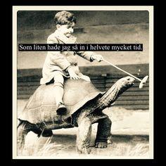 #tid #sköldpadda #unge #kid #barn #rida #zoo #humor #text #kul #löjligt #idioti #foto #gammalt #gamm - villfarelser Good Smile, Make Me Smile, Strong Words, It Gets Better, Nice To Meet, Really Funny, I Laughed, Haha, Funny Pictures