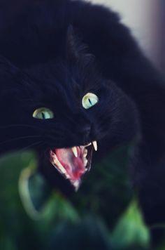 "✮✮""Feel free to share on Pinterest"" ♥ღ www.catsandmes.com"