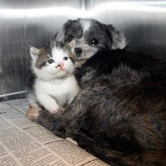 Want to feel better about life? Look at this dog and her adopted kitty