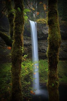 Silver Falls State Park is a state park in the U. state of Oregon , located near Silverton . The Silver Falls State Park Concessi. Oh The Places You'll Go, Places To Travel, Places To Visit, Beautiful Waterfalls, Beautiful Landscapes, Les Cascades, All Nature, Amazing Nature, Belle Photo