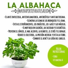 Propiedades de la Albahaca Health Remedies, Holistic Nutrition, Healthy Nutrition, Healthy Life, Healthy Recipes, Wellness Fitness, Health And Wellness, Health Fitness, Body Weight