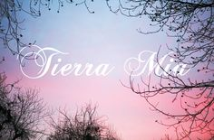 Julie Wolfson Interviews Ulysses Romero of Tierra Mia Coffee – Part 1