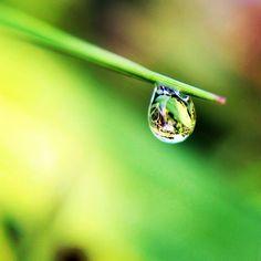 Morning dew #cikoneng #bandung #indonesia #AKart