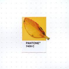 Pantone 7409 color match
