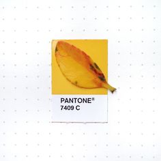 Tiny PMS Match - Pantone 7409 color match. Another fall leaf from...