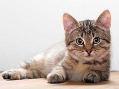 13-Katten-achtergronden-katten-wallpapers-kat-aan-het-luieren-achtergrond.jpg (1600×1200)