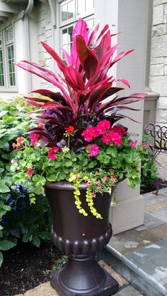 63 simple container garden flowers ideas 5 is part of Container gardening flowers - 63 simple container garden flowers ideas 5 Outdoor Flowers, Outdoor Plants, Outdoor Spaces, Container Flowers, Flower Planters, Full Sun Container Plants, Large Flower Pots, Unusual Flowers, Beautiful Flowers
