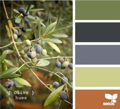 Trendy Exterior Paint Colours For House Olive Design Seeds Ideas Colour Pallette, Color Palate, Colour Schemes, Color Combos, Exterior Paint Colors For House, Paint Colors For Home, Paint Colours, Palette Design, Design Seeds