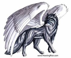 106 Best Winged Wolves Images On Pinterest