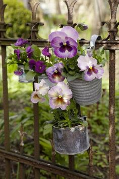 shabby iron fence withpansies hanging on it