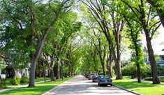 Urban Forests in Atlantic Canada Canada Landscape, Forest Landscape, Green Corridor, Street Trees, Sustainable City, Green Street, Urban Park, Tree Line, Tropical Landscaping