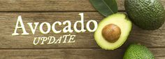 West Pak Avocado's Doug Meyer and Freska Produce's Dave Patterson Discuss Strong Start for California Avocados #CAAvoGold