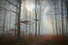 Allein    Nachdenklich geh ich spazieren,  Allein im dunstigen Wald,  Muss den Schritt reduzieren,  Der Nebel ist dicht und eiskalt.    Der Weg wellig, teilweise glatt,  Genau wie im Leben,  Mal oben, mal unten, mal platt,  Von Spuren umgeben.    Im Nebel sehe ich Wahrheit,  spüre die Erde, das Sein,  Erkenne die Einsamkeit,  Bin trotz Bäume völlig allein.    © Horst Rehmann (*1943), deutscher Publizist, Maler, Schriftsteller und Kinderbuchautor