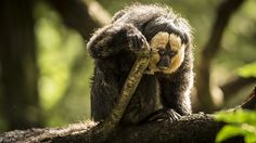 https://flic.kr/p/xc8CmL | 220/365. Went to a zoo specializes in apes and monkeys. Apenheul. In many places the little monkeys were just among the people. (Actually, as in the society is the case)