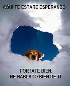 Frase De Amor A Los Animales Nuestro Projimo Vetgro Pinterest