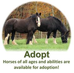 Gentle Giants Draft Horse Rescue - someday I might need this. Draft horses are my favorite.