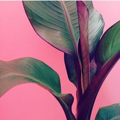 How about this gorge #plantsonpink by @deluxefurnishings?