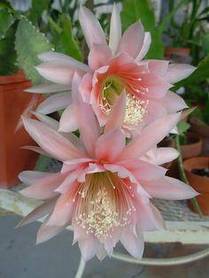Blog com fotos, vídeos, dicas e curiosidades sobre flores e plantas