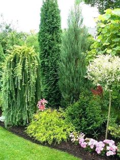conifer garden ideas 2 tall conifers but different textures beautiful conifer shrub tree plant combinations and landscape designs conifer garden design ideas australia garden landscape design Garden Shrubs, Diy Garden, Garden Cottage, Garden Trees, Shade Garden, Trees To Plant, Backyard Shade, Desert Backyard, Garden Basket