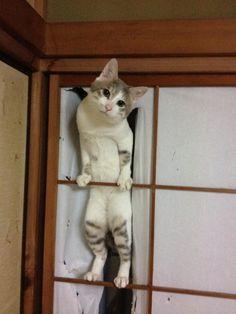 【ネコ画像】Twitterで人気の猫画像TOP10 この顔www 続きはこちら →http://goo.gl/vy1Yn3 #猫動画 #猫画像 #猫…