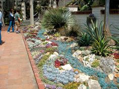 Large succulent bed - down sides of house - larger plants in background: cycads