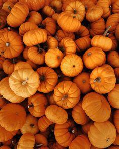 orange pumpkins on brown wooden surface photo – Free Orange Image on Unsplash