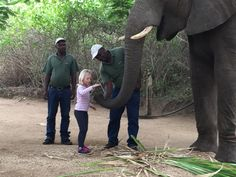 While on you golf safari the family can interact with the Elephant. Private Safari, Out Of Africa, Elephant, Golf, In This Moment, Animals, Animales, Animaux, Animais
