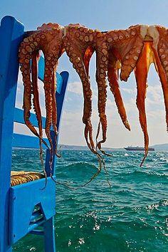Drying octopuses, Adamas village, Milos, Cyclades Islands Greece
