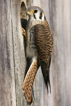 ((((((⃢⃢ #Birds ((((((⃢⃢ #kuş ((((((⃢⃢