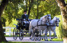 #Lipica #Slovenia. Znana je po konjih, katere je v dar dobila tudi  #Quenn Elizabeth.