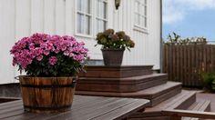 kom-i-gang-med-tjaeralin-terrassebeis Plants, Patio, Plant, Planets