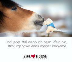 Und jedes Mal wenn ich beim Pferd bin, stirbt irgendwo eines meiner Probleme.  #pferd