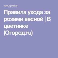 Правила ухода за розами весной | В цветнике (Огород.ru)