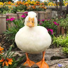 ハルね、トマトが食べられる様になったんだよ(๑'ڡ'๑)୨♡ 皮は残しちゃうけど♡ * #アヒル#コールダック#鳥#ペット#花#公園#夏#ご機嫌#かわいい #おはよう #callduck #duck #bird #pet #cute #cutepetclub #flowers… Cute Little Animals, Cute Little Things, Cute Funny Animals, Pet Ducks, Baby Ducks, Duck Pictures, Cute Animal Pictures, Fat Animals, Animals And Pets