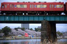 428:「タイトル:トワイライトの岡崎公園。名鉄電車と橋脚の間から見える岡崎公園の桜と乙川と岡崎城を構図しました。」@岡崎公園