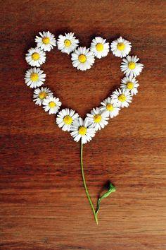 Free Image on Pixabay - Daisy, Heart, Daisy Heart, Love Beltane, Samhain, Doula Training, Daisy Love, Natural Birth, Getting Pregnant, Pregnant Tips, Chronic Illness, Parenting Advice