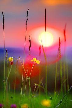 Buttercup Sunset