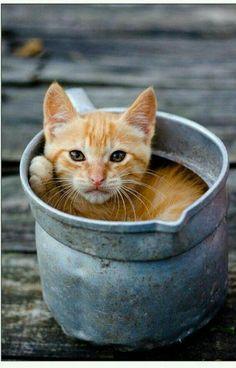 Lenka, get your butt out of a bucket.