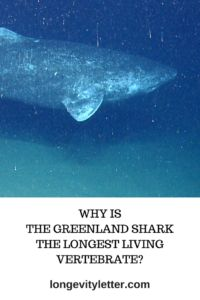 Why is the Greenland shark the longest living vertebrate? Shark Habitat, Greenland Shark, Shark Facts, Vertebrates, Habitats, Swimming, Science, Age