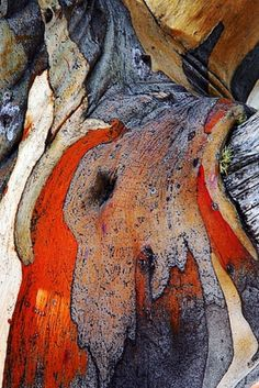 Texture and pattern: tree bark. Natural Forms, Natural Texture, Patterns In Nature, Textures Patterns, Tree Patterns, Art Grunge, Foto Macro, Art Texture, Wood Texture