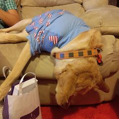 Momma thinks I am drunk. No! I am just bored it's Saturday Night afterall I should've been out and about... :( #goldenretriever #labrador #biscuit #cuteoverload #love #tshirt #dogshirt #dogshirts #BiscuitHiew #dogsofperth #australia #perth #me #cute #goldensonofinstagram #instadog #instapets #scratch #retrieversofinstagram #ilovedog #retrieverstagram #talesofalab #dailydogpost_#satudaynight #bored #drunk by biscuithiew #lacyandpaws