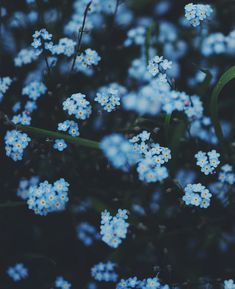 Blue Aesthetic Discover Photo by Light Blue Aesthetic, Blue Aesthetic Pastel, Rainbow Aesthetic, Aesthetic Colors, Aesthetic Collage, Flower Aesthetic, Aesthetic Vintage, Aesthetic Photo, Aesthetic Pictures