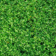 Leafy Green Shower Screener™