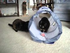 Allegra and Ruby with The Ultimate Cat Tunnel Cat Tunnel, Cat Love, Bean Bag Chair, Toys, Animals, Products, Animales, Animaux, Toy