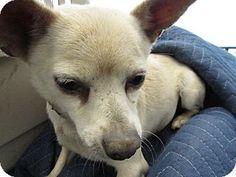 adopt a pet kennel 55 corona ca shelter corona animal