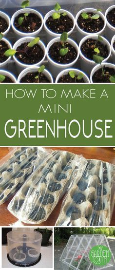 Inexpensive way to create mini green houses to start your own seedlings! Plant and grow your own vegetables by starting them from seed, easy and frugal!