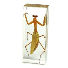 Constantly inspired by Natural History, check out Praying Mantis Pa..., our new beautiful design available at http://www.encyclo-art.com/products/praying-mantis-paperweight?utm_campaign=social_autopilot&utm_source=pin&utm_medium=pin
