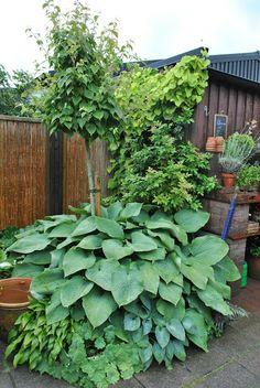 I Tages trädgård Garden Inspiration, Garden Ideas, Back Gardens, Land, Outdoor Structures, Patio, Yum Yum, Dreams, Terrace